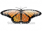 Monarch Butterfly Clipart Graphics