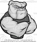 Muscular Mean Bulldog with His Arms Crossed on Chest