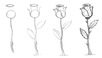 How to draw a rose - Learn How to Draw a Rose Step by Step
